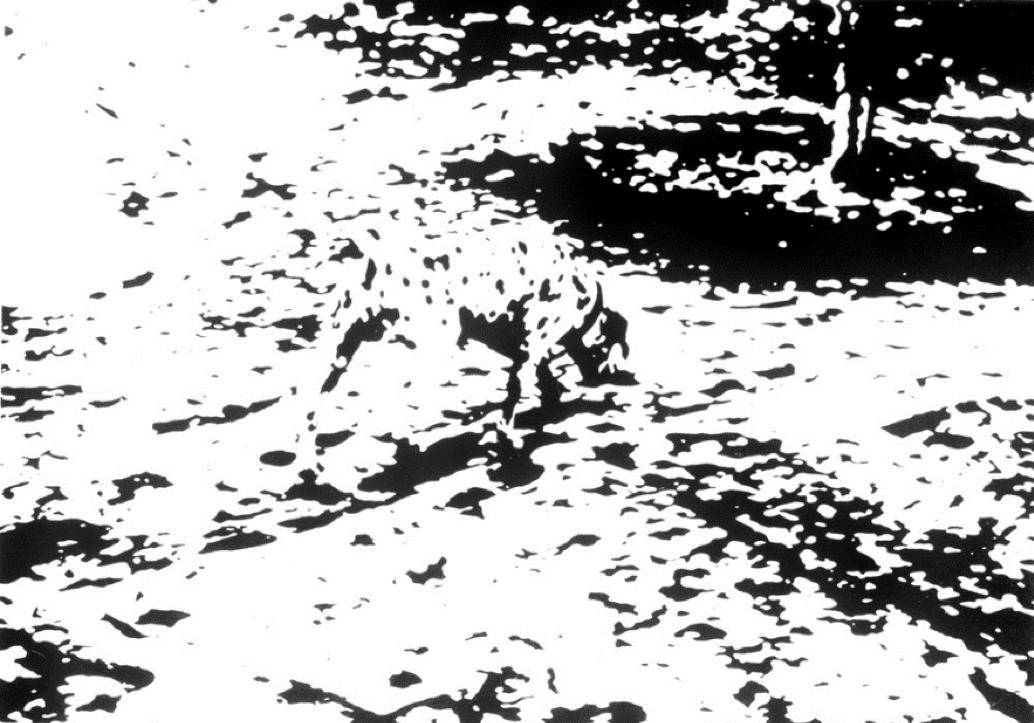 dalmatian illusion